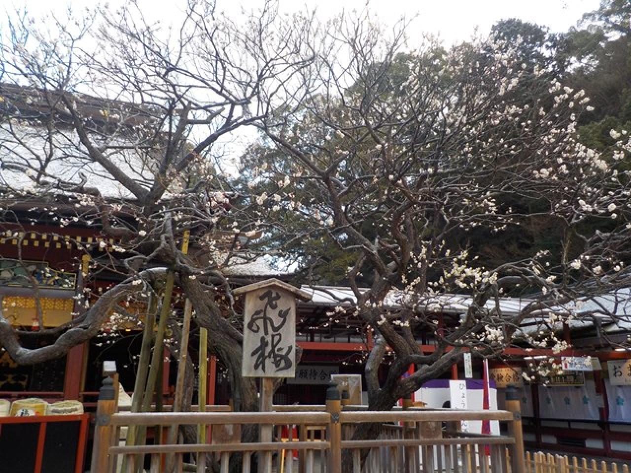 0cdbbd889ac 「令和」の典拠になったのは、日本最古の和歌集である万葉集で、太宰府政庁の長官だった大伴旅人が開いた梅花の宴に合わせて詠われた歌の序文から取られたという。