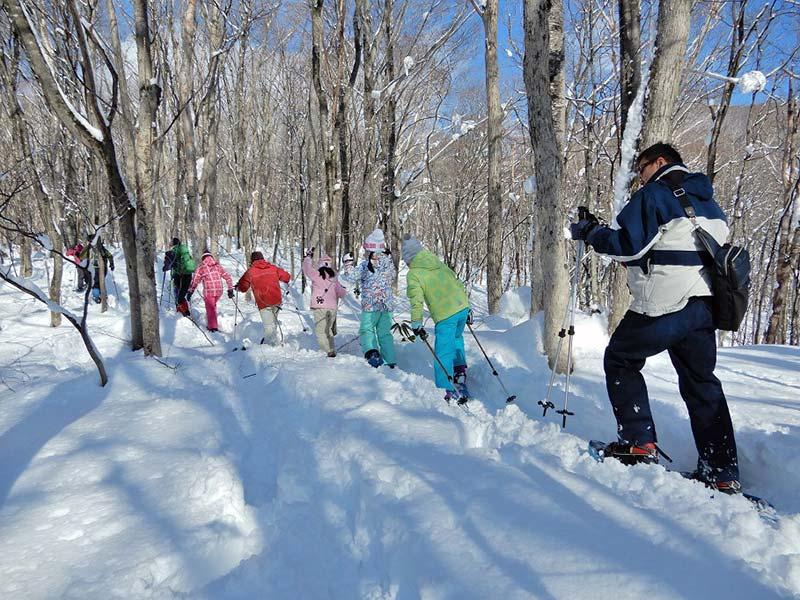 網張の森雪上ハイキング(イメージ)