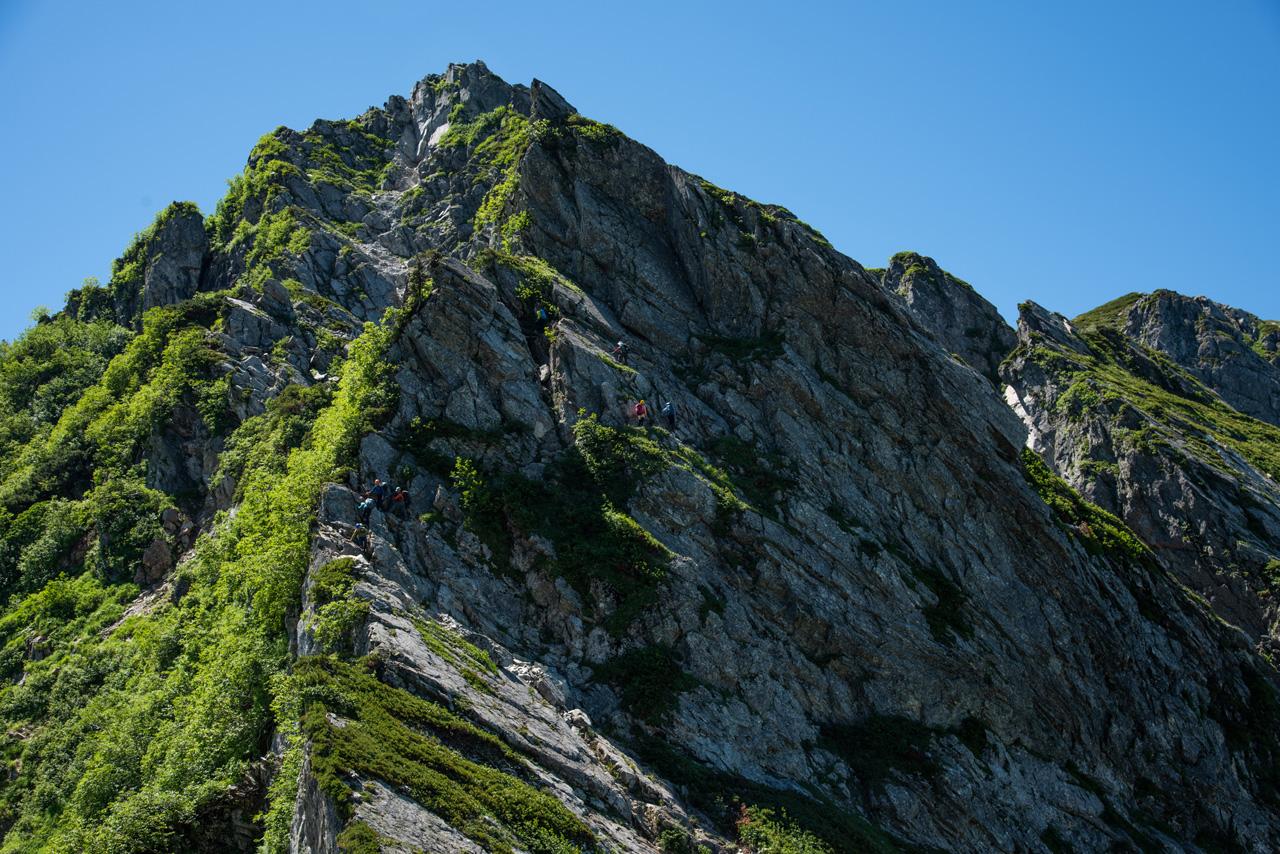 憧れの白馬三山~不帰ノ嶮、高山植物が最も美しい7月に人気ルートを ...