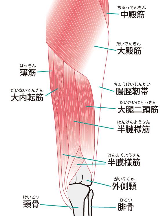 外側 痛い 股関節