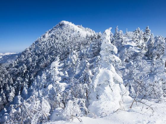 樹氷の白と空のスカイブルーを満喫