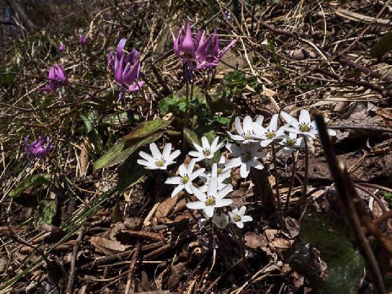 早春の花のトレッキングを楽しむ