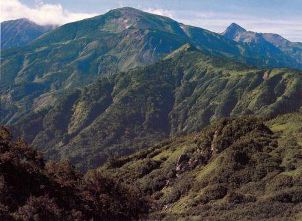 雪倉岳 - 多種多様な高山植物が...